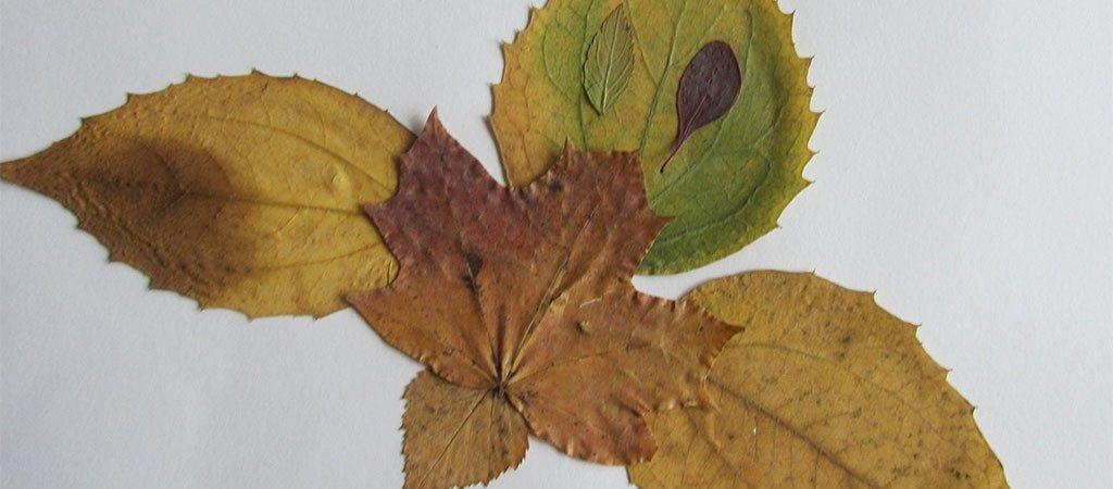 Pirmokų darbeliai iš medžių lapų