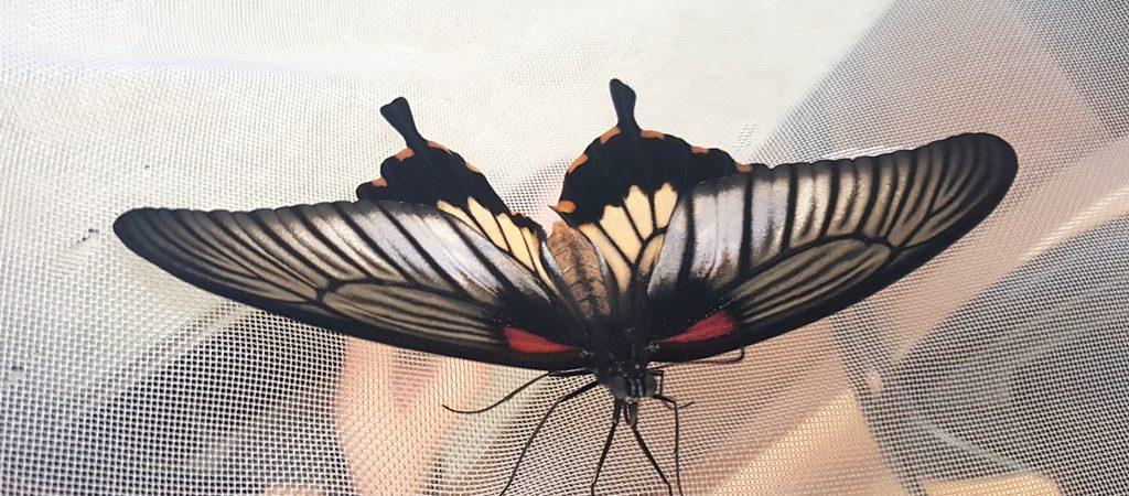 """Trečiokų projektas""""Užsiaugink drugelį pats"""""""